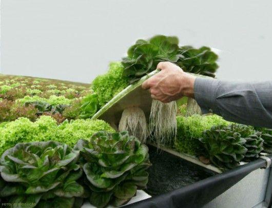 hidroponia tipos de sistema de cultivo sem solo por meio de diferentes tipos de sistemas