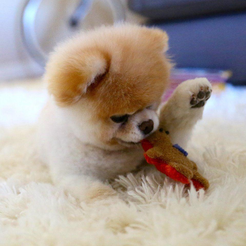 Popular Bear Brown Adorable Dog - 3b2c29f7044766df205b207ba7825a50  2018_944179  .jpg