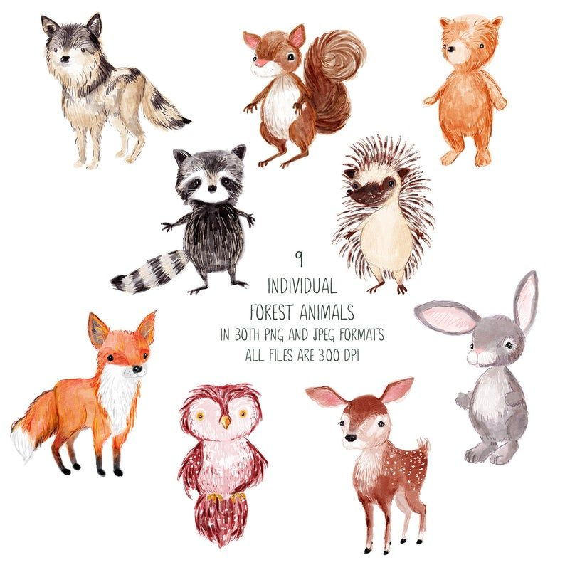 Forest Animals Watercolor Clipart Woodland Animal Clip Art Etsy Forest Animals Illustration Watercolor Animals Animals