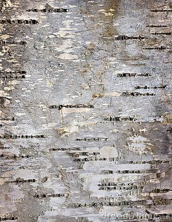 Birch Bark Wallpaper Bark Details Of Birch Tree Stock