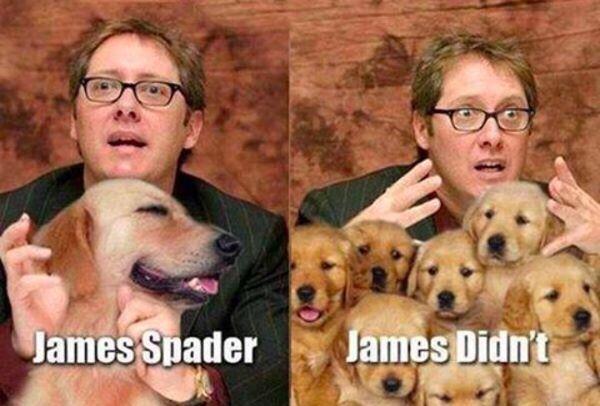 Spay Neuter Celebrity Name Puns Funny Memes Sarcastic Celebrity Puns