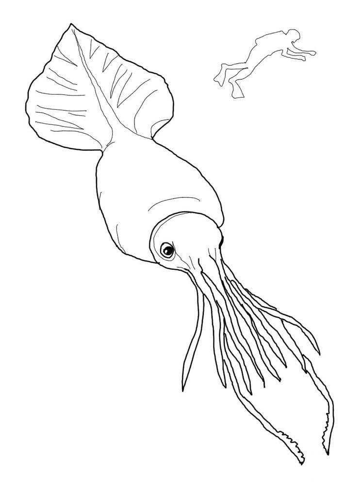 Squid Coloring Pages To Print Squid Is A Type Of Aquatic Animal With Tentacles And Has No Vertebrae Invertebrates Most People Know This Animal After Being S