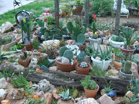 Small+Container+Cactus+Garden+Design | Share Photos : Gardening:Cactus