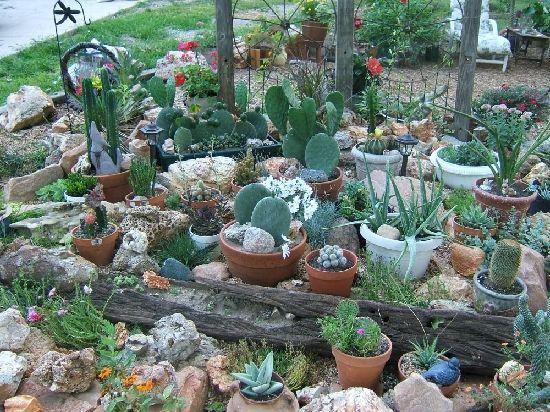 Genial Another Cactus Garden Idea