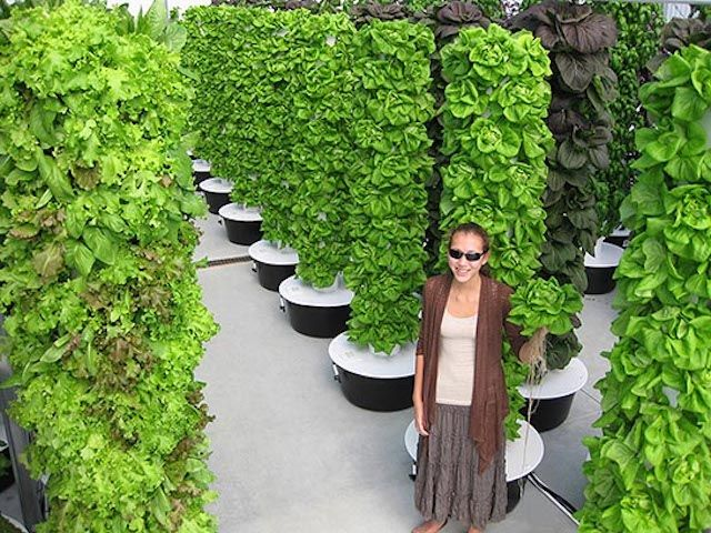 Can Led Advances Help Vertical Farms Take Root Hydroponic Gardening Vertical Vegetable Garden Vertical Vegetable Gardens