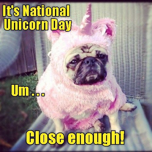 Nationalunicornday Hashtag On Twitter Pugs In Costume Funny