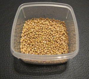 Senfsamen Mustard seeds Sarson
