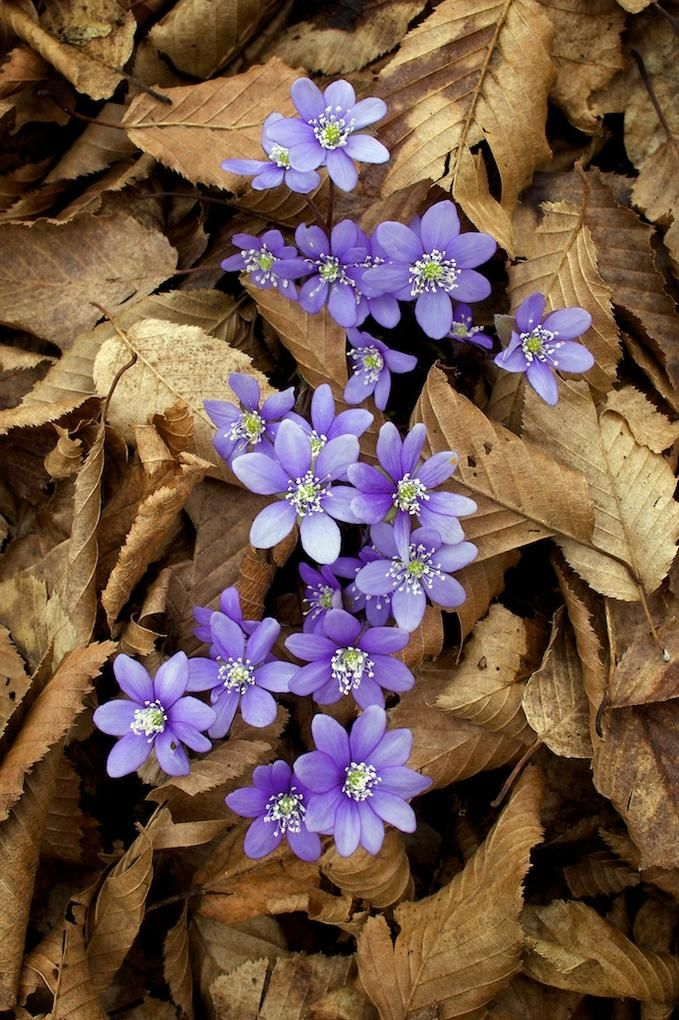 Purple Flowers Are A Great Way To Add Interest To Your Yard Or Landscape See Some Of Our Favorite Purple Garden Amazing Flowers Fall Flowers Beautiful Flowers