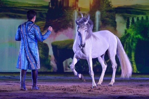 Jahr des Pferdes mit APASSIONATA erleben : Politik Wirtschaft und Lebensart
