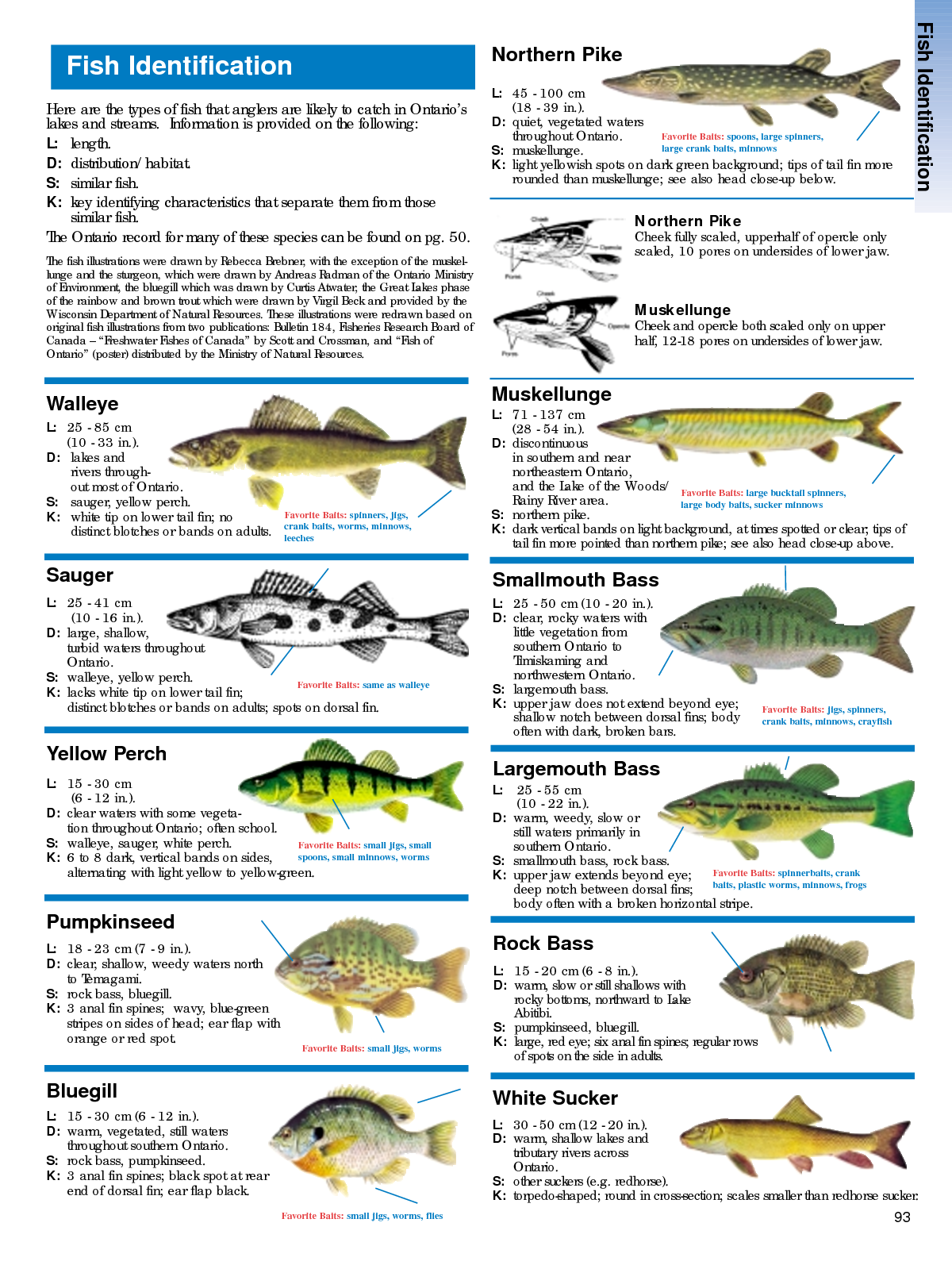 Google Image Result For Http Img Docstoccdn Com Thumb Orig 85419333 Png One Fish Outdoor Life Fish