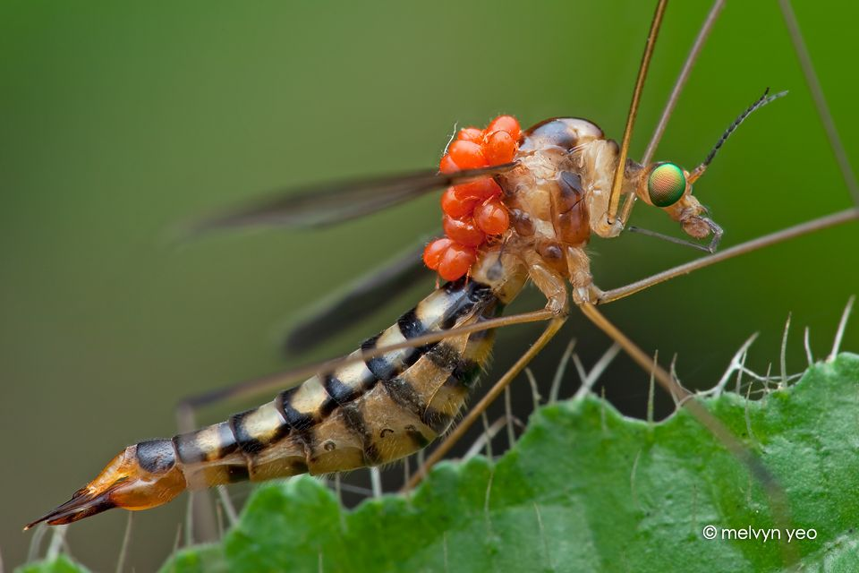 Bugs 蟲 おしゃれまとめの人気アイデア Pinterest ぞっど