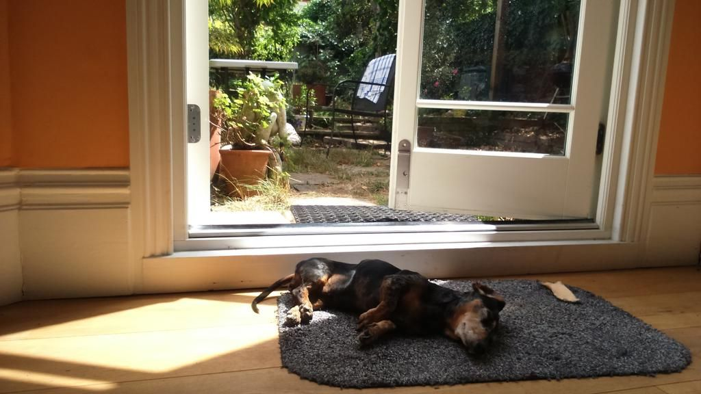 Ah those summer days!  Blue Patch mascot is hard at work... #bluepatch