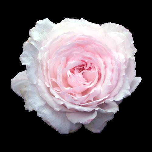Vv Ulfe Bullet Journal Tumblr Flowers Pink