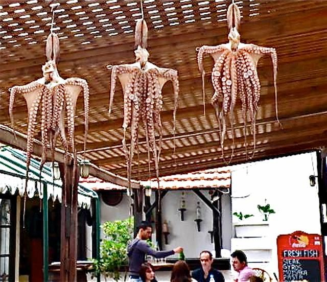 Drying Poulpe In Local Greek Restaurant