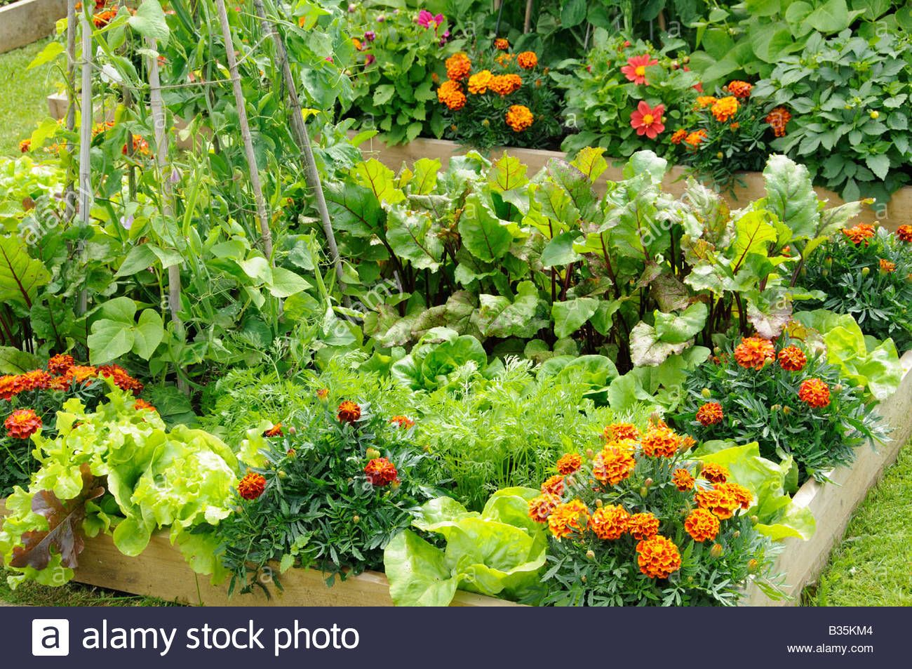 Summer Garden With Mixed Vegetable And Flower Potager Style Raised Beds Uk June Stock Photo Vegetable Garden Potager Garden Garden Features
