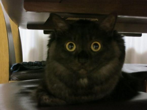 金環日食│猫ギャラリー│フェリシモ猫部│フェリシモ