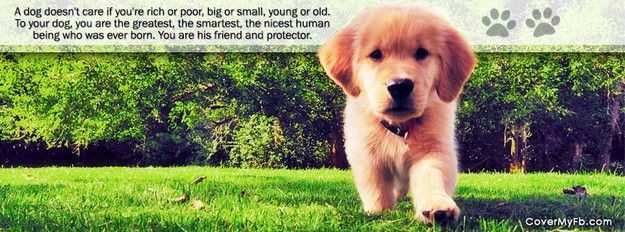 A Dog Doesn T Care Facebook Cover Golden Retriever Golden