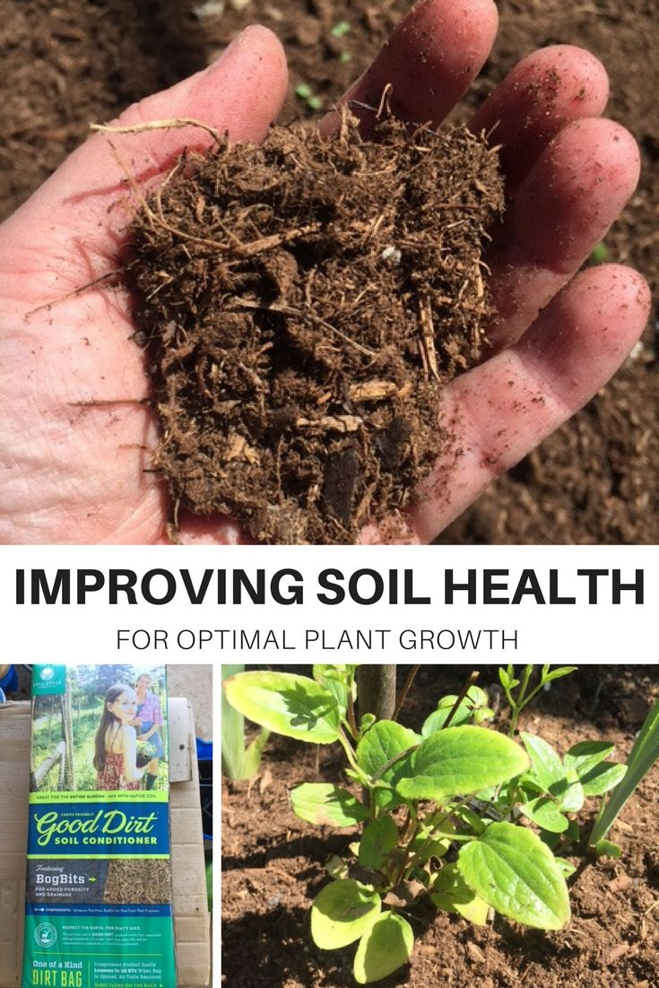 Good Soil Is The Basis For Healthy Happy Plants Adding Organic Matter Is One Of The Best Things You Organic Container Gardening Plant Growth Soil Improvement