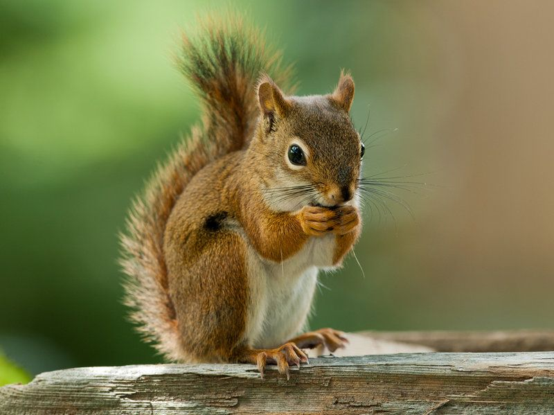 What S It Like To Be A Squirrel Squirrel Pictures Animals Squirrel