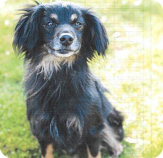 Vista, CA - Terrier (Unknown Type, Medium) Mix. Meet ceasar, a dog for adoption. http://www.adoptapet.com/pet/10935366-vista-california-terrier-unknown-type-medium-mix