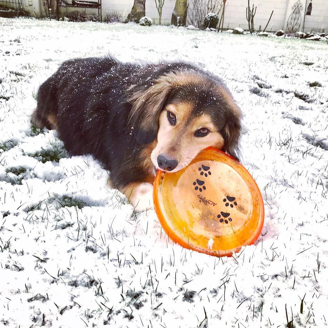 beagle mix puppies mn