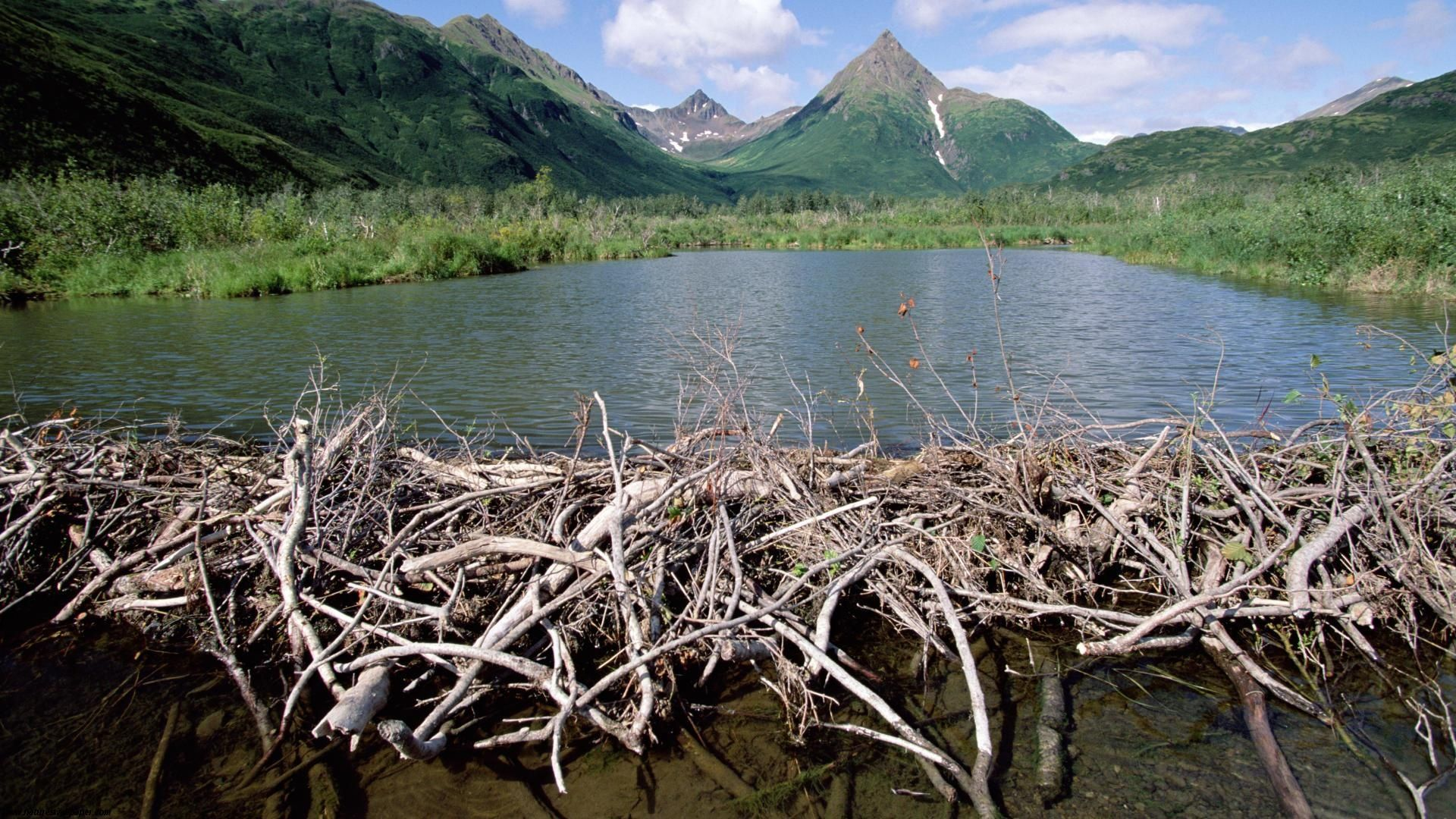 dams beaver dam tikchik state park alaska [ 1920 x 1080 Pixel ]
