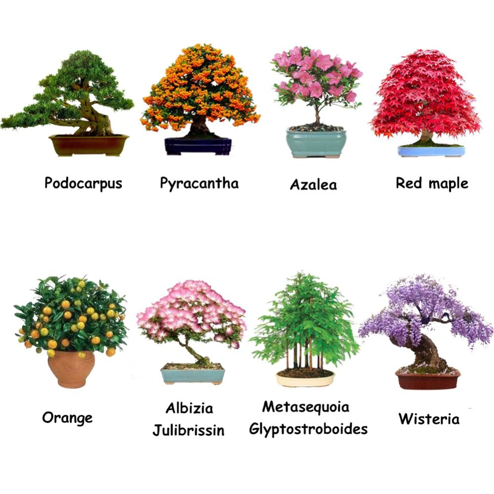 8 kinds of potted packages ornamental beautiful garden for 5 plantas ornamentales y sus caracteristicas