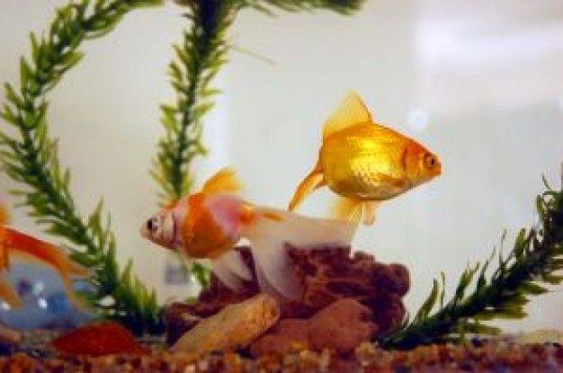 Aprender a cuidar un pez
