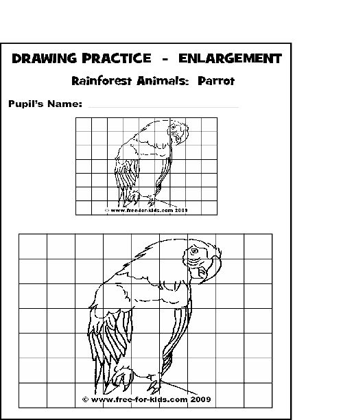 Practice Drawing Pages Of Rainforest Animals Art Worksheets Drawing Practice Drawing Grid