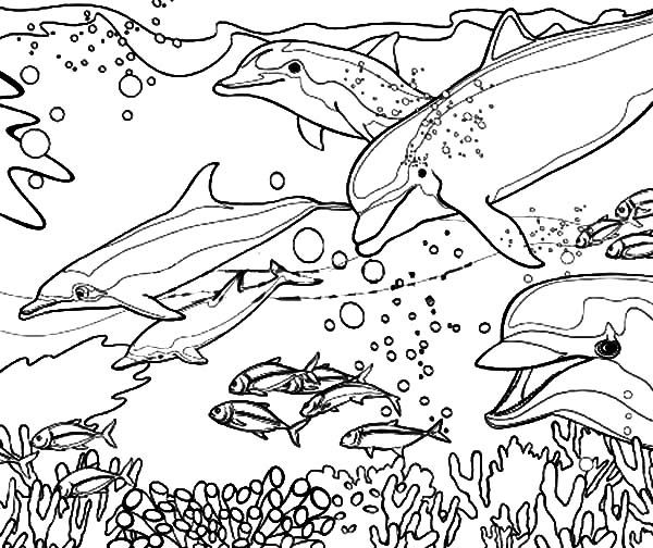 Dolphin Coloring Pages: Coral Reef Fish Dolphin Coloring