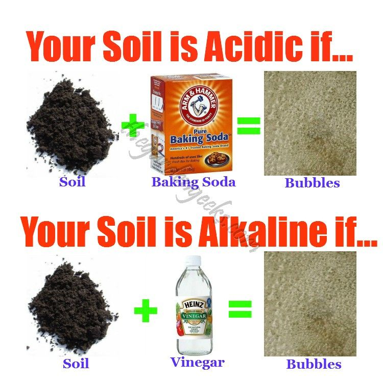 Simple Garden Soil Test To Check For Acidic Or Alkaline