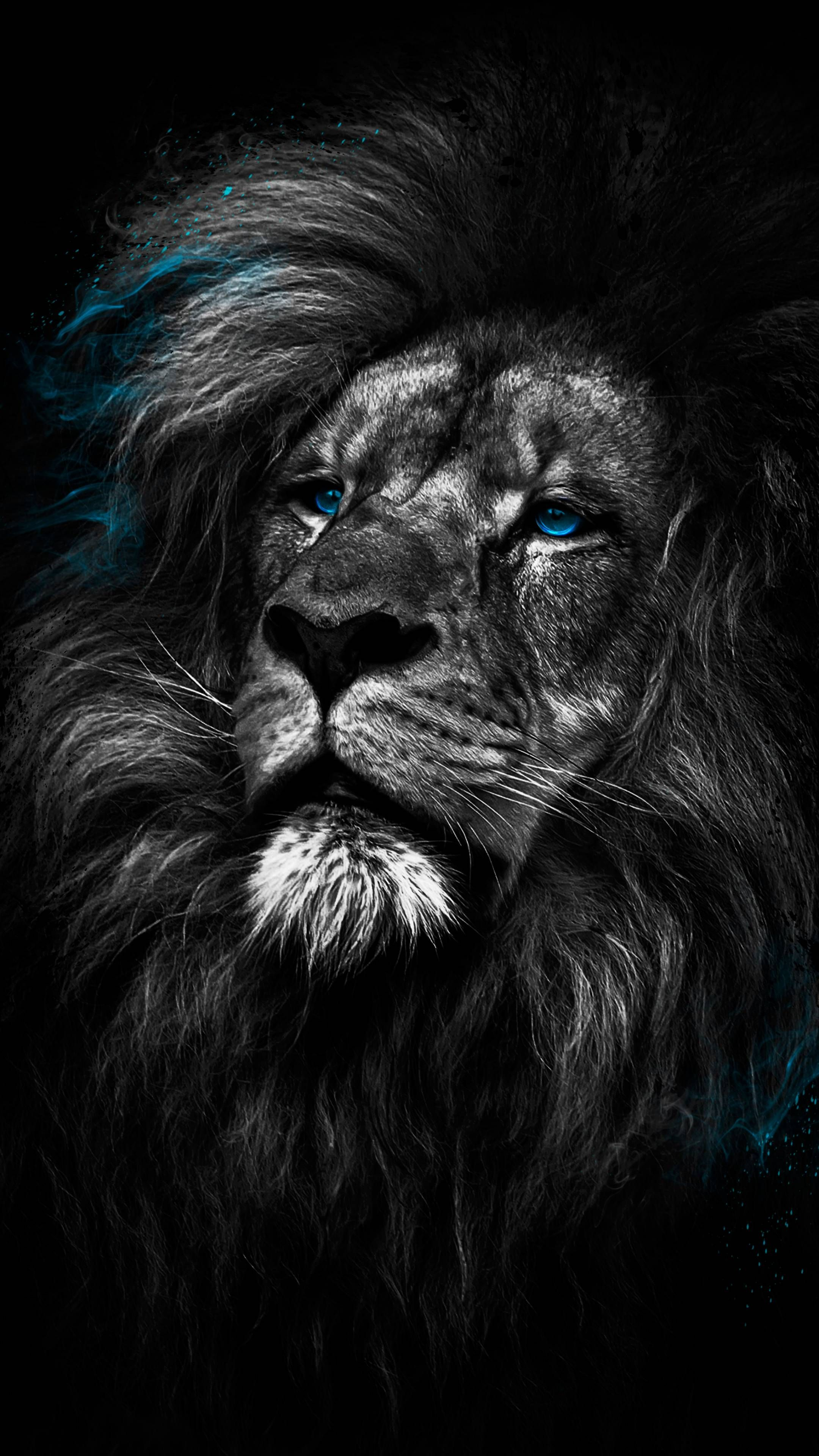 Lion Dark 4K Amoled Android Black Wallpapers ⋆ Traxzee