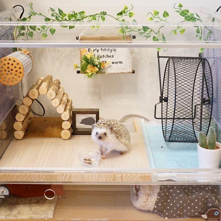 Pin By Kailyen Warner On Hedgies Hedgehog Pet Cage Hedgehog Pet Baby Hedgehog
