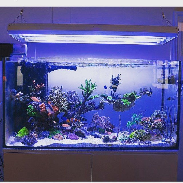 This Aquascape Is Perfect! REEF Owned By @metrokat If You