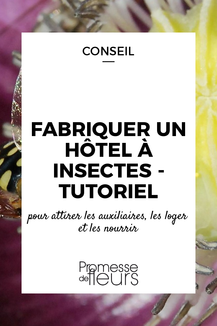 L\'hôtel à insectes ou maison à insectes sert d\'abri aux auxiliaires. Découvrez comment le fabriquer, sans plan, avec des matériaux de récupération.