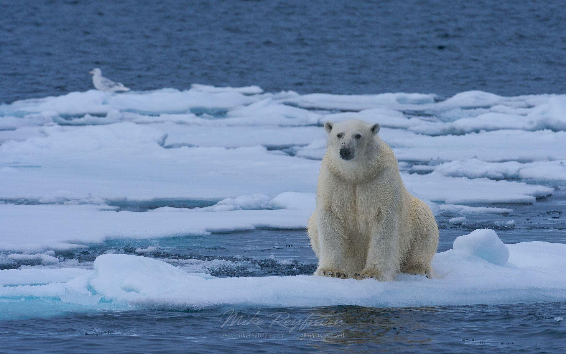 🔥 25+ Best Memes About Ice Bear | Ice Bear Memes