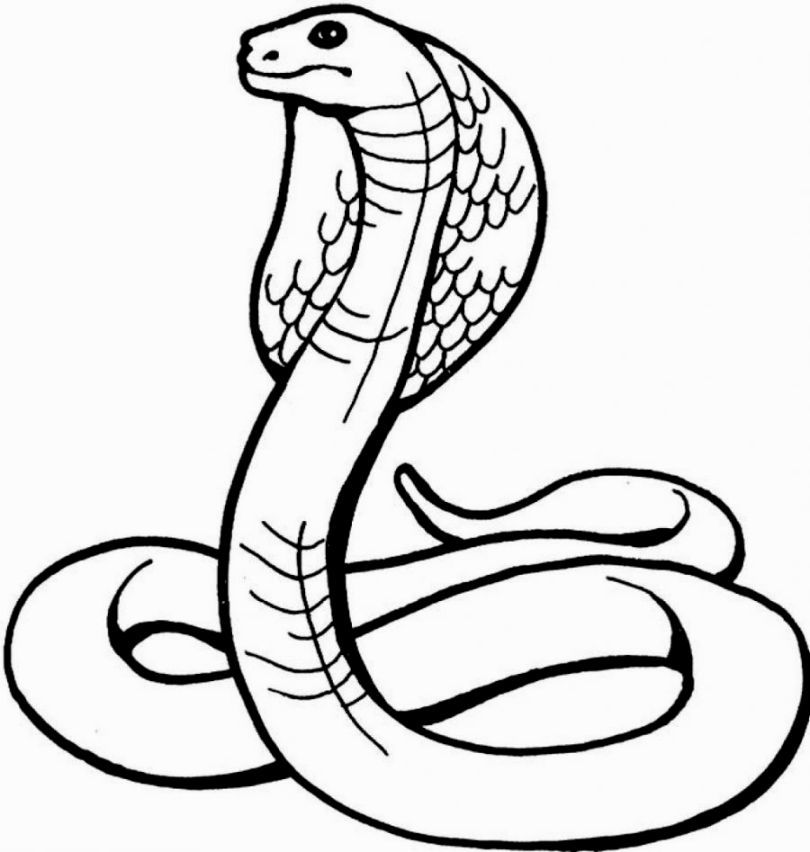 Snake Coloring Sheet | Coloring Pages | Pinterest | Snake ...