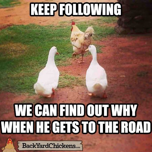 Why Did The Chicken Cross The Road Funny Animal Memes Funny Relatable Memes Cute Animal Memes