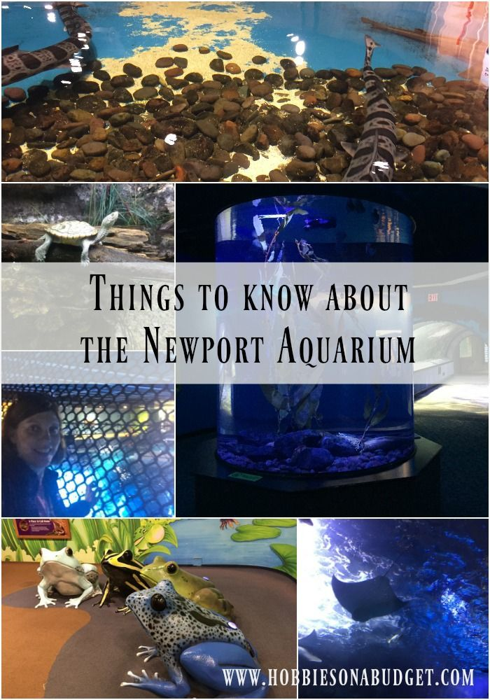 Things to know about the Newport Aquarium | Newport ...