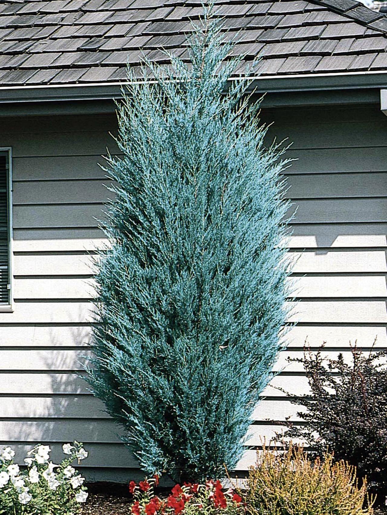 Living Christmas Trees DIY Holidays Pinterest