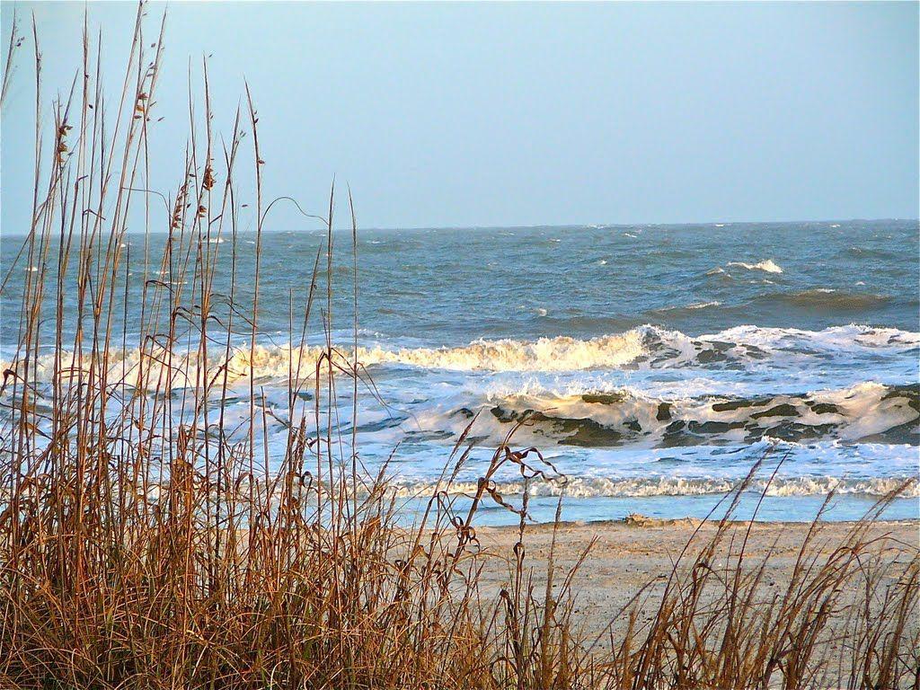Isle of Palms Wild Dunes | Panoramio - Photo of Beach at Wild Dunes ...