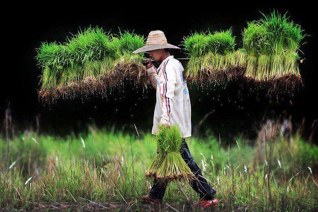 ผลการค นหาร ปภาพสำหร บ ว ถ ชาวนา Photographer Photography Around The Worlds