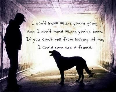 Pin By Davi Christensen On Dogs Pinterest Dogs Dog Quotes And