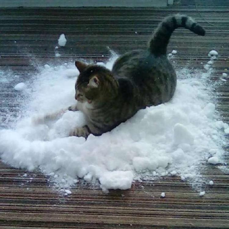 Photo of La familia se entrega al gato obsesionado con la nieve al traer la nieve al interior
