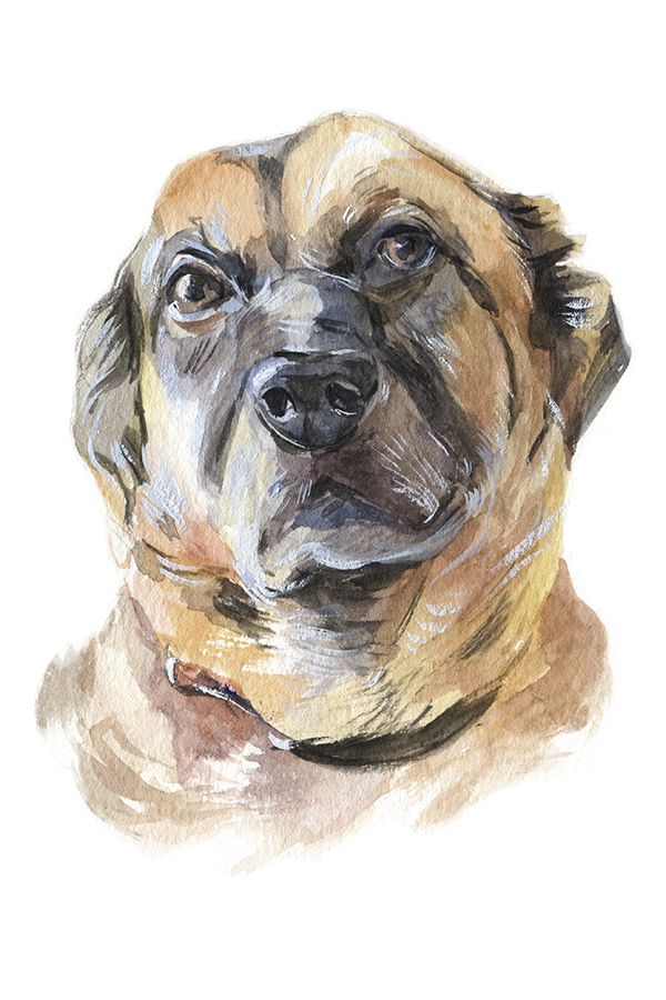 Custom Watercolor Dog Portrait Painting From Photo Visit My Etsy