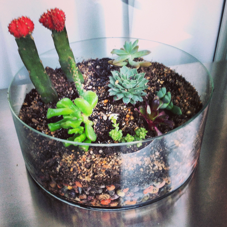 Arregl mi arreglo con suculentas y cactus centerpiece for Arreglo jardines pequenos