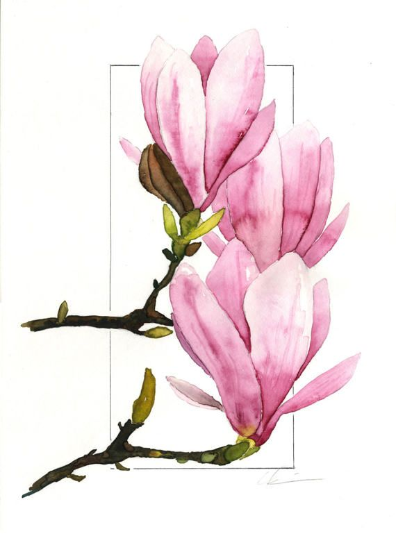 Pink Purple Green Springtime Saucer Magnolia Magnolias Flower Drawing Floral Watercolor Flower Painting