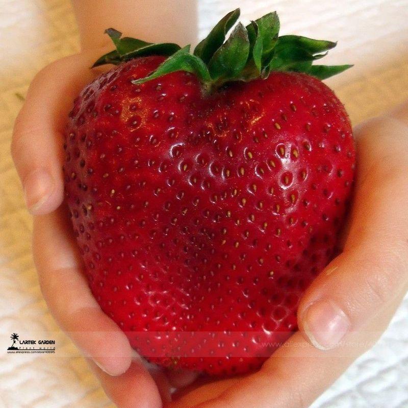 Più rari Heirloom Super Gigante Giappone Rosso Fragola Sementi Biologiche, Professional Service Pack, 100 Semi/Pack, dolce Succosa Frutta E3063