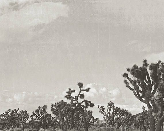Black And White California Photograph Joshua Tree Landscape Print