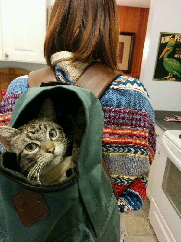 Login Or Sign Up かわいい猫 猫大好き 美しい猫